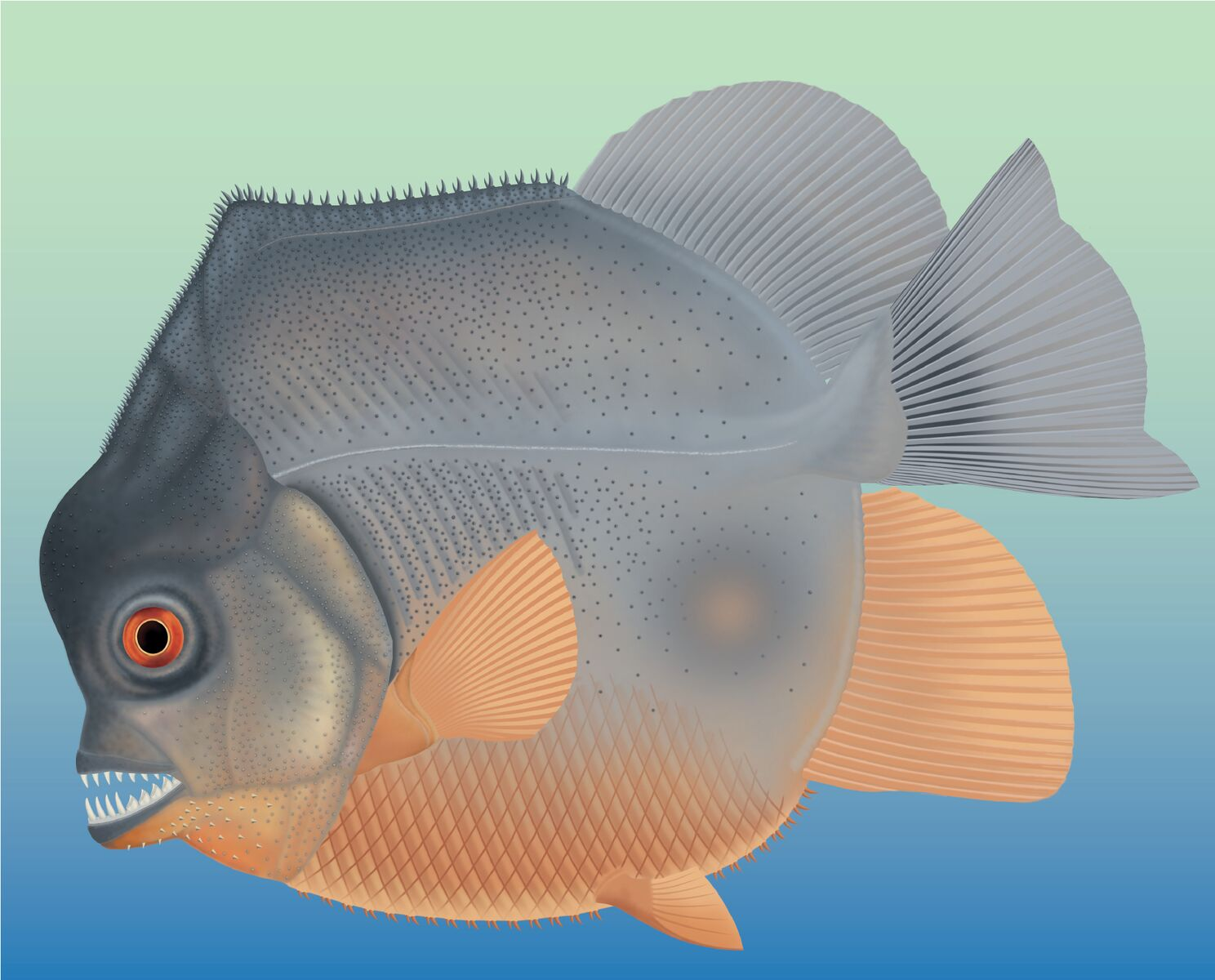This image shows an artist's reconstruction of the Piranha like fish Credit: Jura-Museum Eichstätt