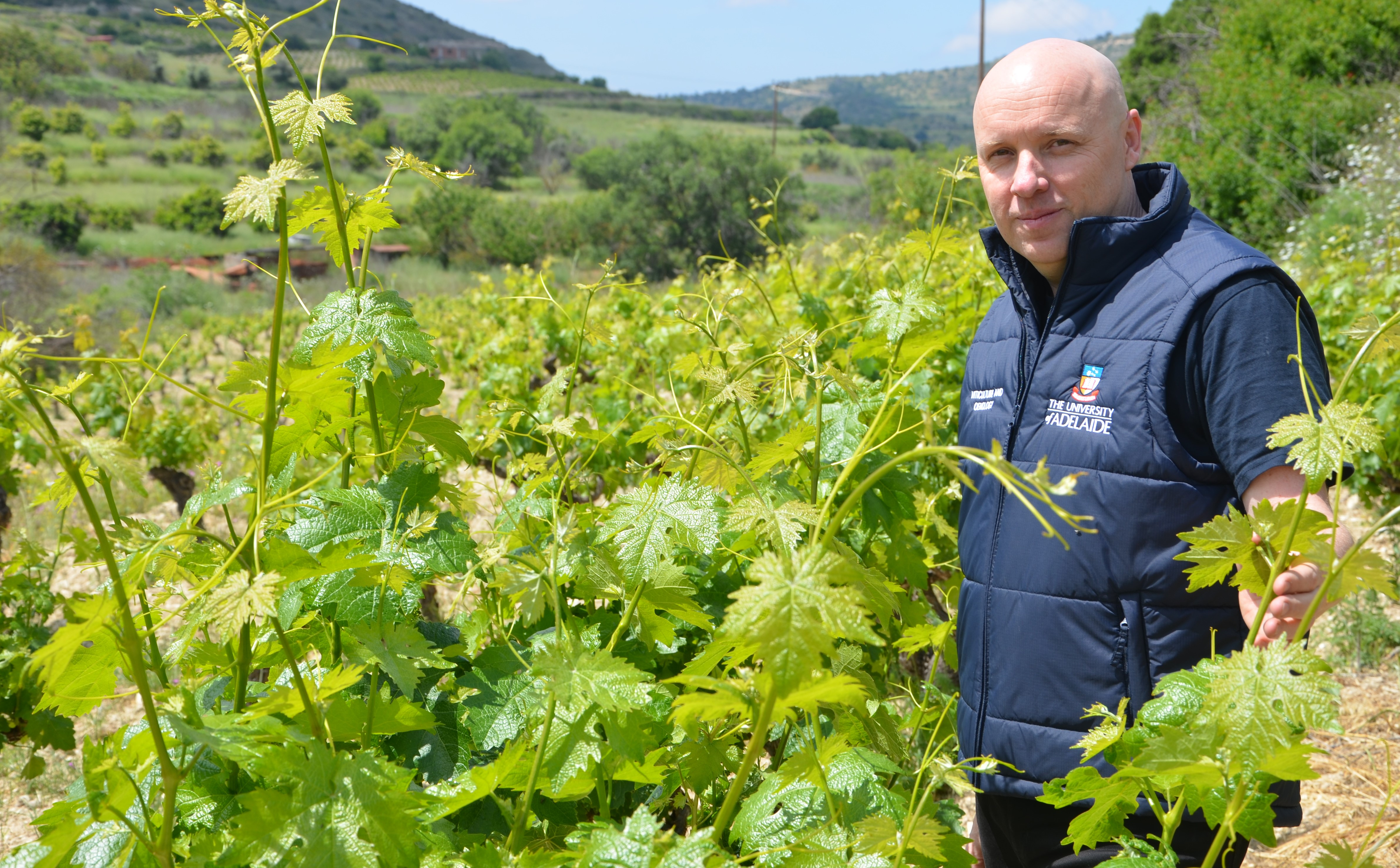 Alex Copper with the drought-tolerant grape variety Xynisteri in Cyprus
