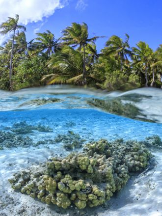 Nearshore corals forming the inner part of the coral reef around a reef island