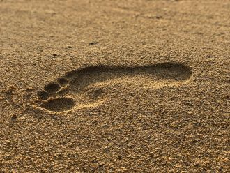 Human feet have evolved two unique arches that allowed us to run and walk, compared to chimpanzees, gorillas and macaques, which have flat feet that bend in the midfoot. New research suggests one of these two arches contributes more than 40 per cent of foot stiffness in a similar way to how bending a sheet of paper along its width strengths the sheet lengthways. The researchers say their findings may aid treatment of flatfoot disorders and improve designs of prosthetic limbs or legged robots.