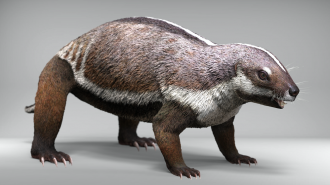 Life-like reconstruction of Adalatherium, the 'crazy beast'