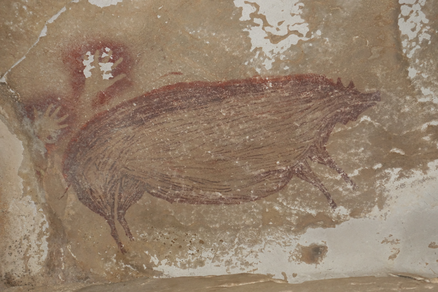 Pig painting (pig 1) dating to at least 45,500 years ago at Leang Tedongnge.  Credit: Maxime Aubert.