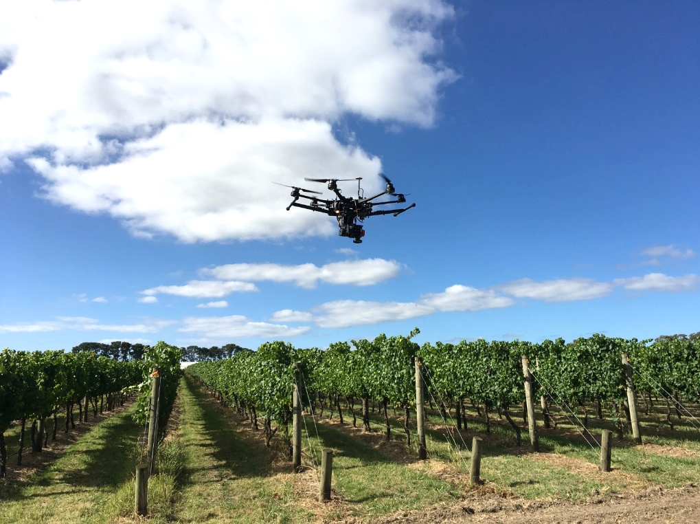 High-tech drones equipped with hyperspectral cameras have been successfully used in Victoria to detect grape phylloxera. Credit: QUT