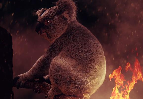 koala-fire-clipped.PNG