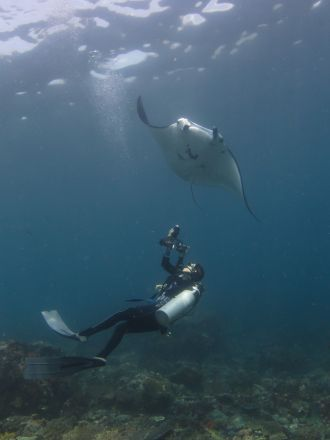 Photo identification of a manta ray in Indonesia