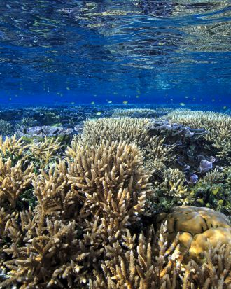 A vibrant and healthy shallow water coral assemblage growing close to sea level
