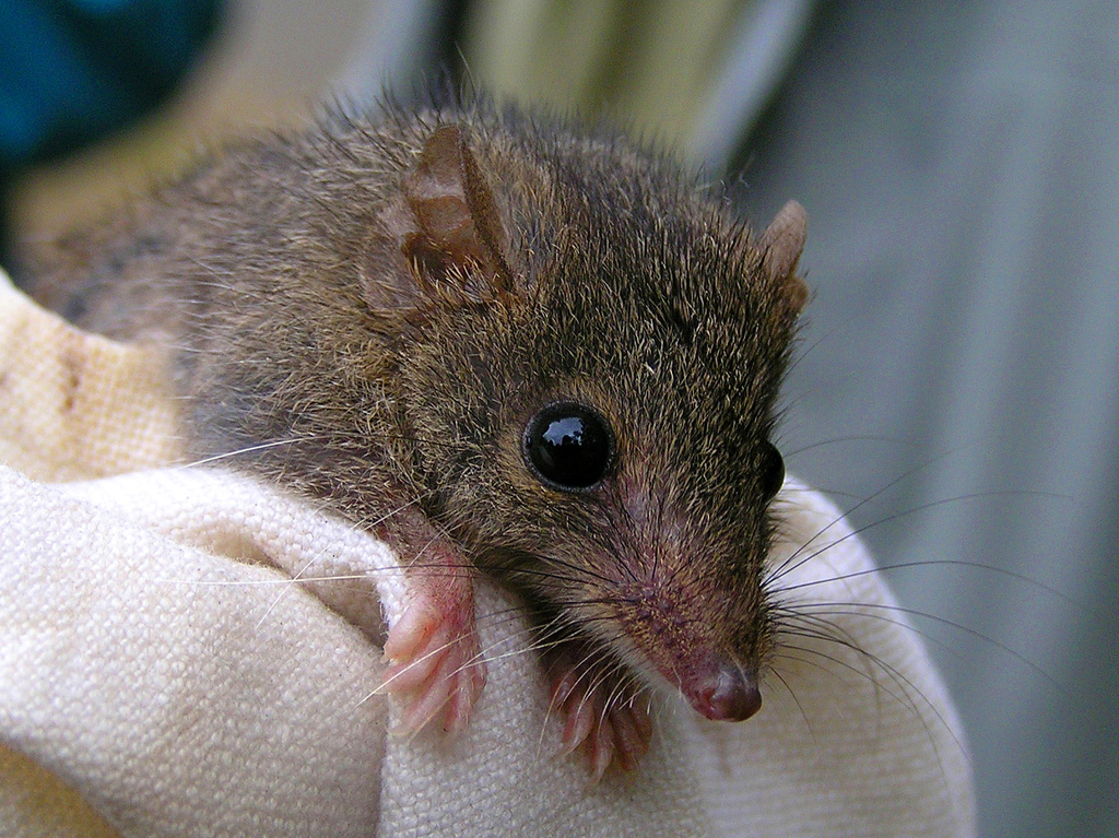 Small marsupials may not cope with climate change