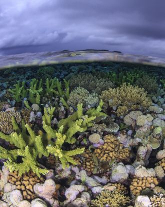Shallow coral reef crest, New Ireland Province, Papua New Guinea