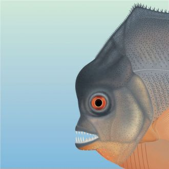 Artist's reconstruction of fish head