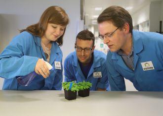 Researchers study effect of rain on Arabidopsis plants
