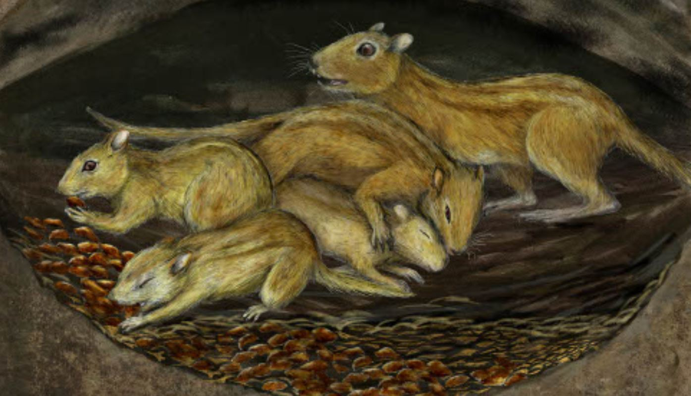 Caption: A group of subadult and adult individuals of Filikomys primaevus huddled together in their burrow while a family of duck-billed dinosaurs roams on the surface.   Artist credit: Misaki Ouchida