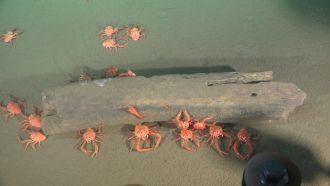Life in the deep sea 2