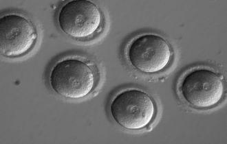 Sign of successful in vitro fertilisation