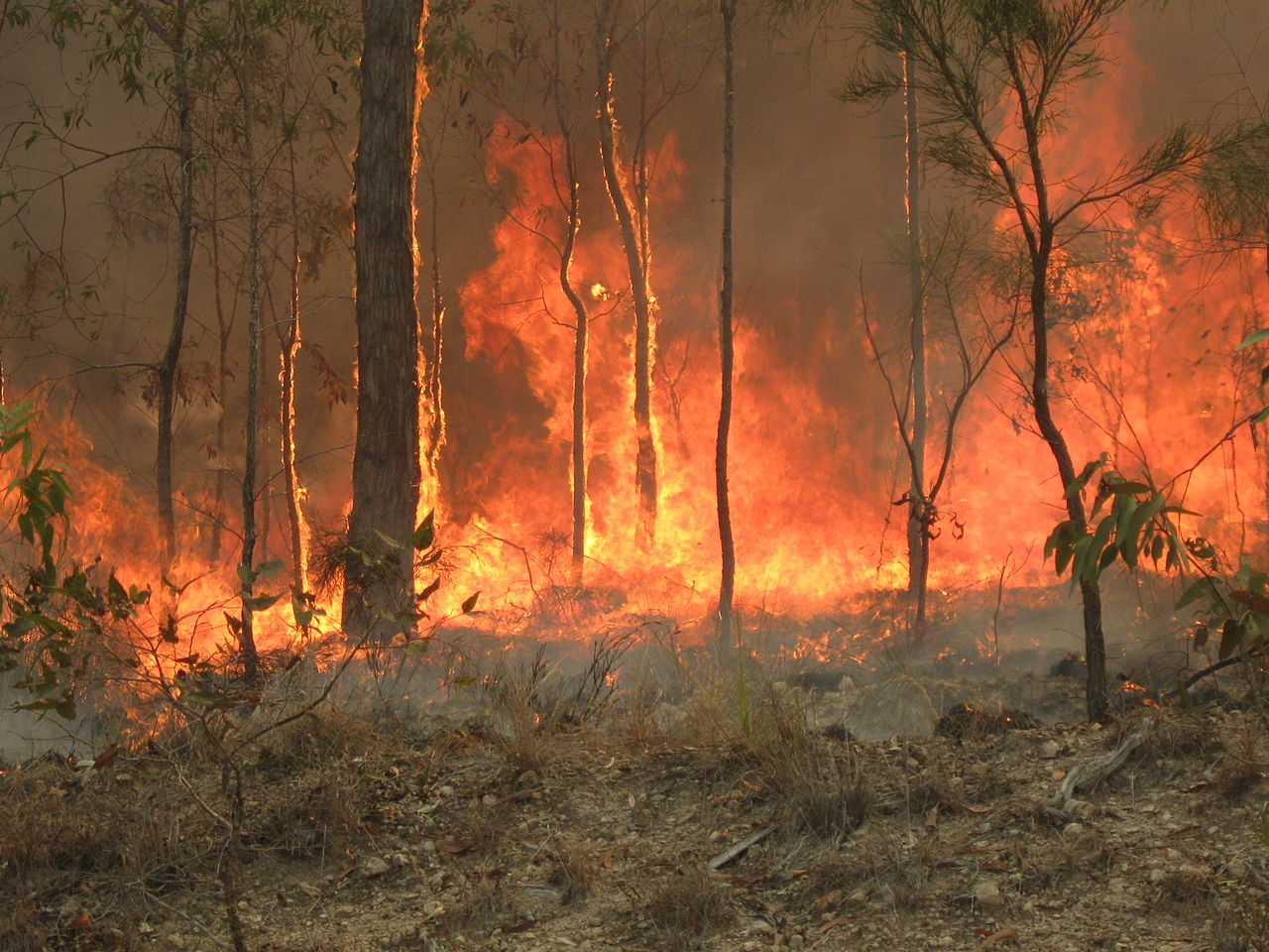 1280px-Bush_fire_at_Captain_Creek_central_Queensland_Australia-By-80-trading-24-Own-work-CC-BY-SA-3.JPG