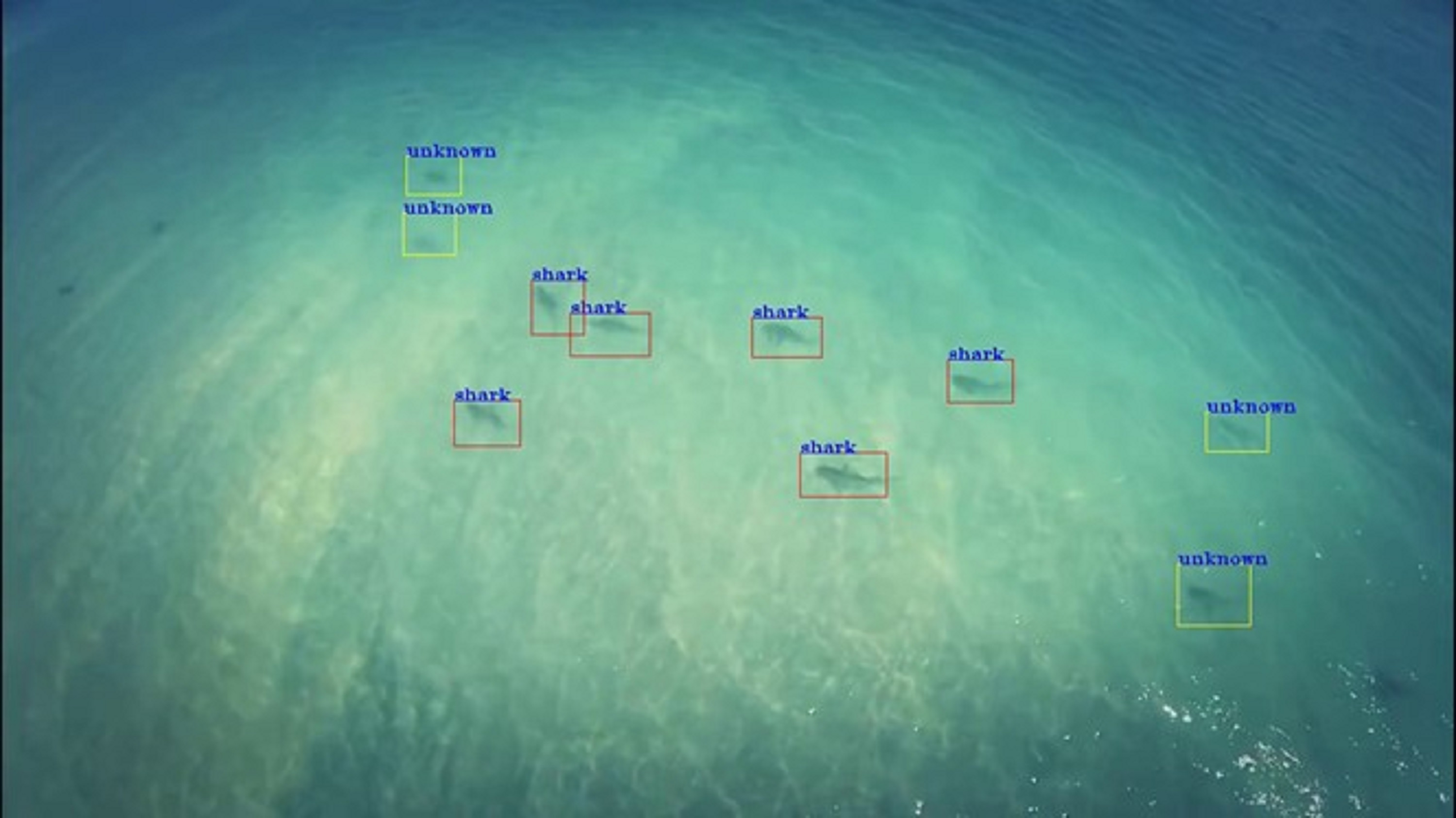 Shark-detecting smart algorithm is Australia's top AI/Machine Learning Innovation