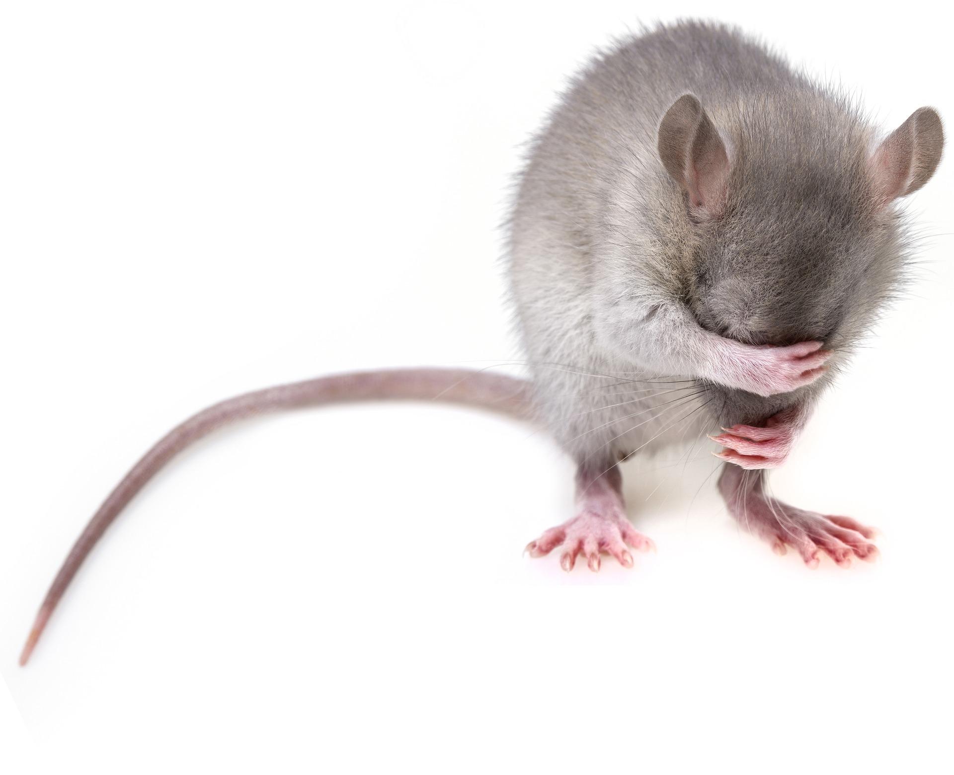 mouse-3194768_1920.jpg