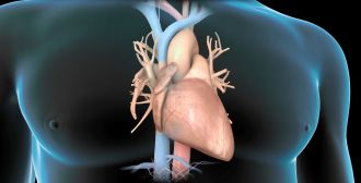 Every 12 minutes, a person dies from heart disease in Australia, making it the single leading cause of death in this country. But what if all those damaged hearts could be repaired with the flick of a switch? A $1 million international study led by the University of South Australia is hoping to do just that.