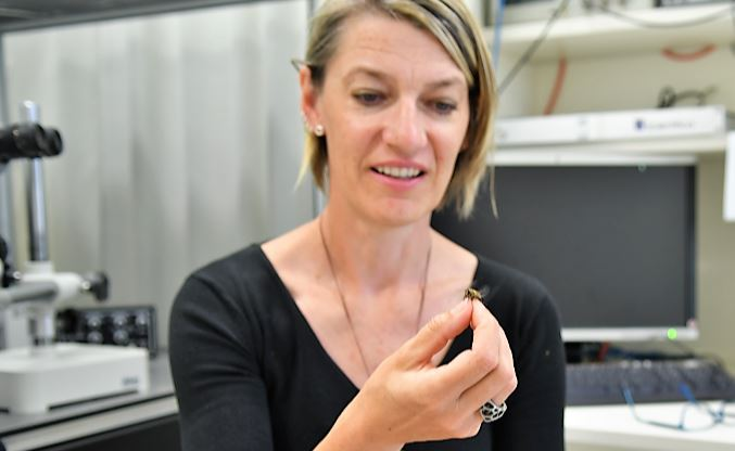 Associate Professor Karin Nordström, Senior Researcher, Flinders University Centre for Neuroscience.
