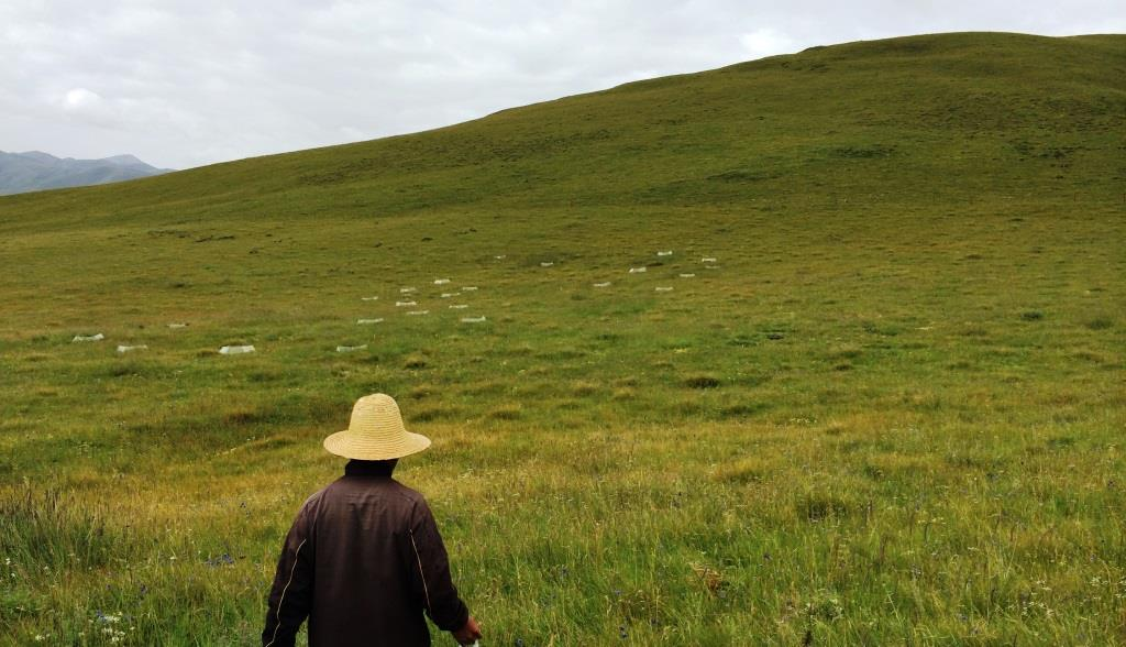 Part of the research site in the Qinghai-Tibetan Plateau. Photo courtesy COREY BRADSHAW