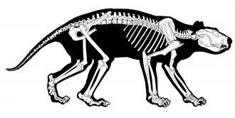 Marsupial Lion Animation
