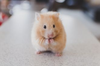 Scientists have discovered a new type of taste cell in mice that can respond to multiple taste sensations, but not salt. Up until now, scientists thought that taste cells in the mouth respond to only one of the five taste qualities: bitter, sweet, sour, salt or umami. In this new research, the authors used genetically engineered mice to show that some cells can be stimulated by sour, sweet, bitter and umami compounds. Their experiments suggest that these cells play an important role in mice feeding behaviour, but more research is needed to confirm whether these cells also exist in humans.
